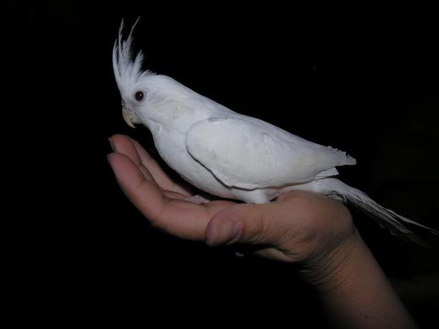 Dicas para a criação correta de pássaros