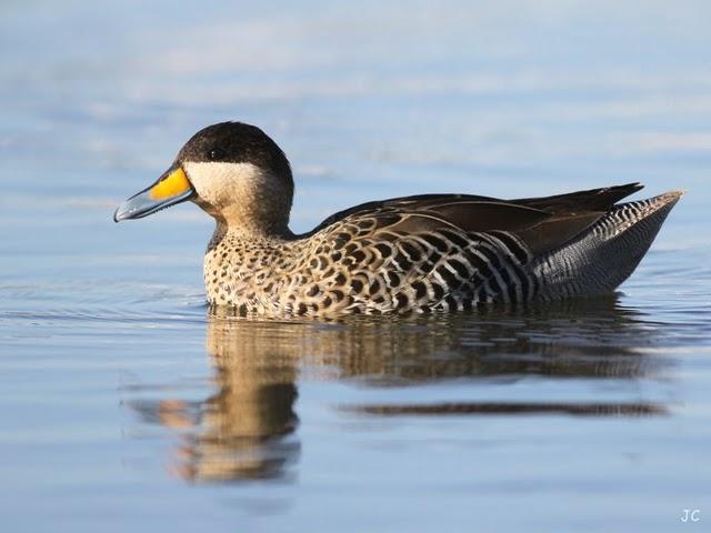 Cuidado com as Aves Aquáticas