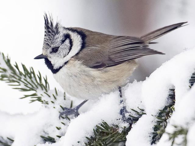 Cuidado com os Pássaros no Inverno