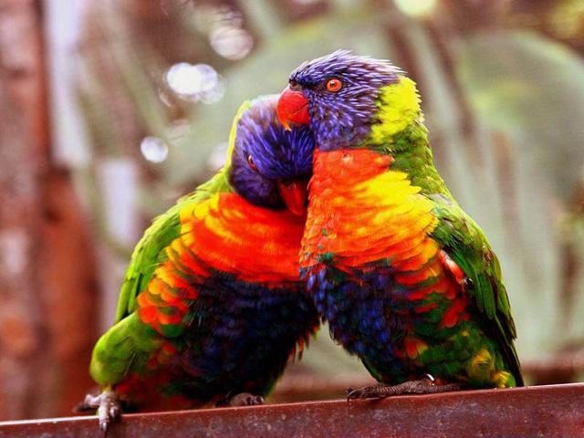 Comportamento Reprodutivo das Aves