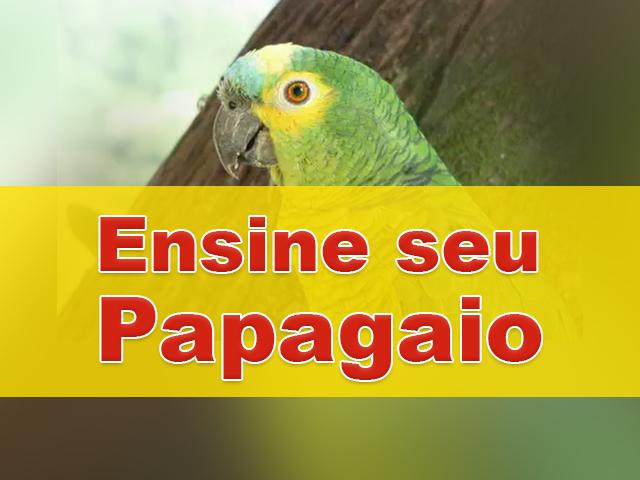 Ensine seu papagaio a fazer truques incríveis com esse curso avançado!