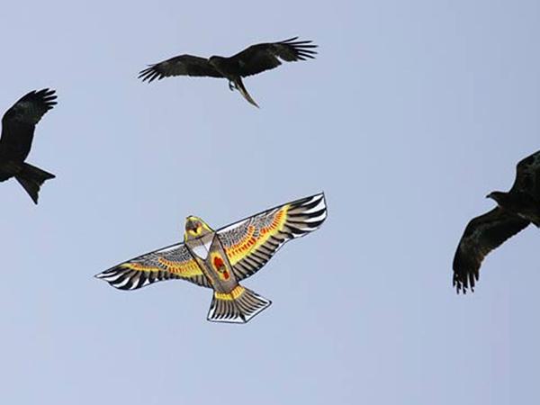 Pássaros se confundem com Pipa em festival.