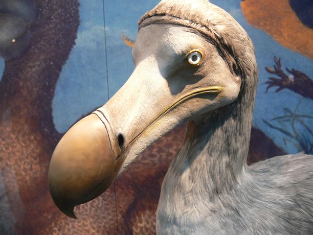 A extinção do pássaro dodô