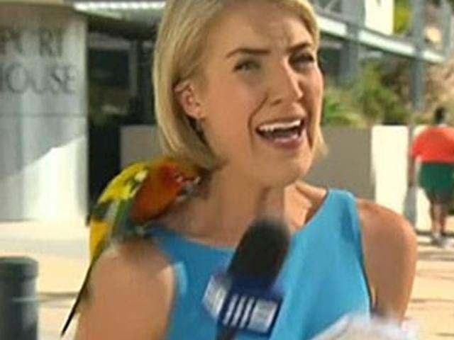 Jandaia-amarela pousa no ombro de uma repórter e ela surta ao vivo.