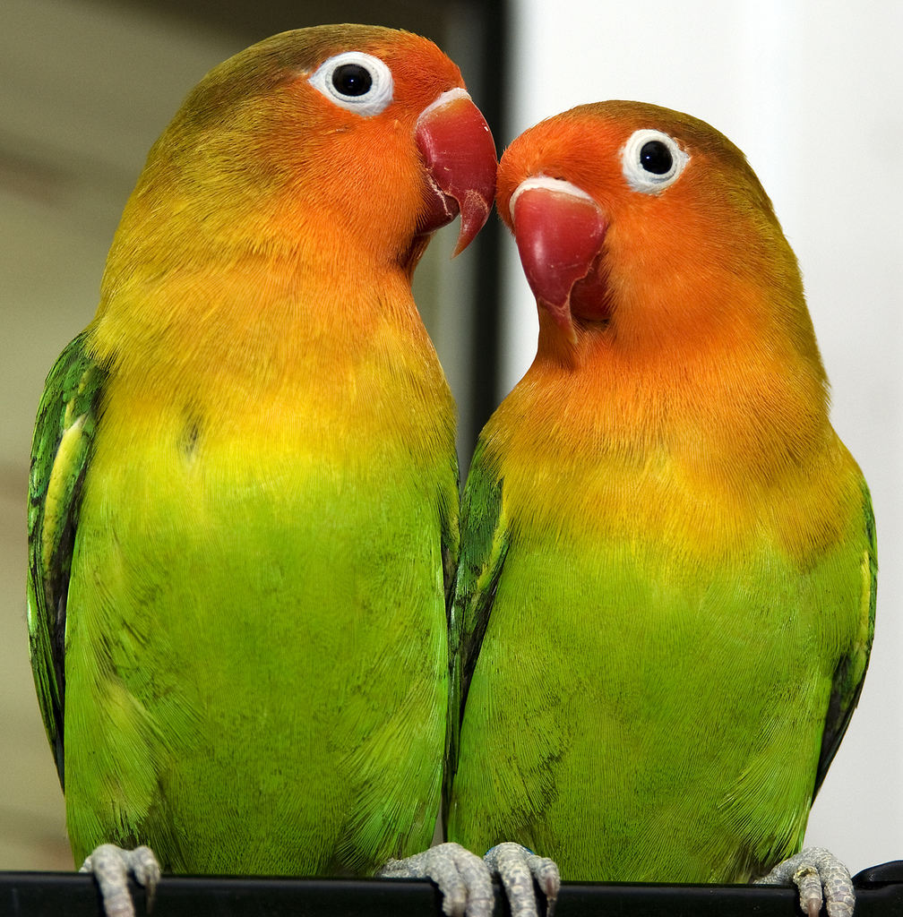 Citaten Love Bird :