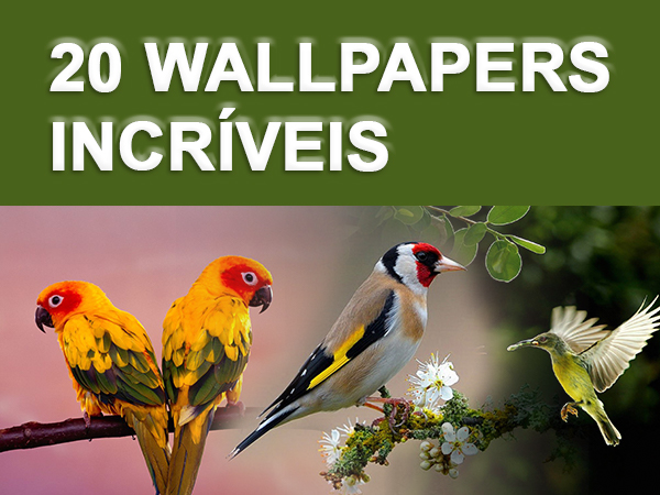 20 Wallpapers Incríveis de Pássaros