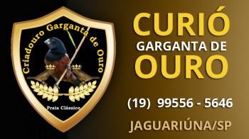 Curío Garganta de Ouro - Jaguariúna/SP