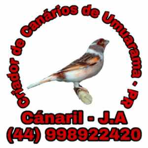 canaril-j-a