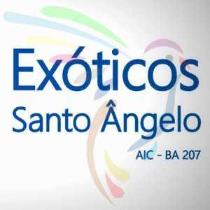 exoticos-santo-ngelo