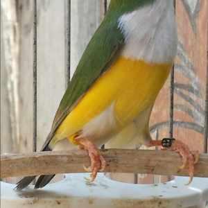 mundo-das-aves-exoticas