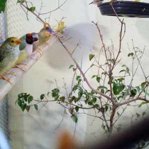 rj-paixao-por-aves
