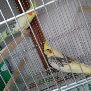 ems-aves-exoticas