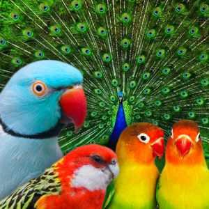 bichos-e-aves-ornamentais