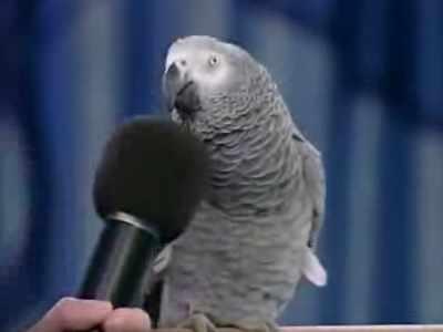 Veja o Papagaio mais inteligente do mundo