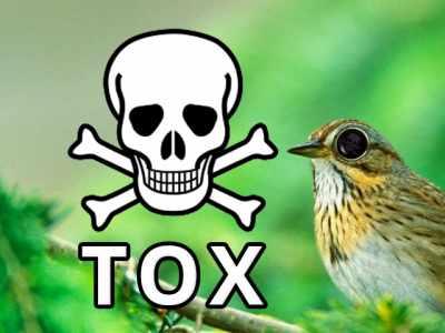 Quais são as causas de intoxicação nas aves?