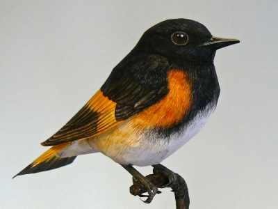 Artista Holandês cria pássaros realistas com papel e tinta