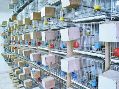 Identificando Doenças em Aves e Criadouros