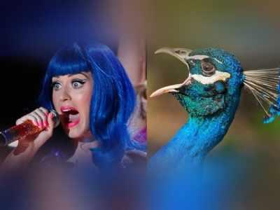 Veja os famosos que se parecem com aves