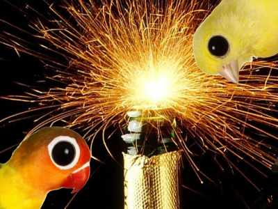 Sua Criação e os Cuidados com as Festas de Final de Ano