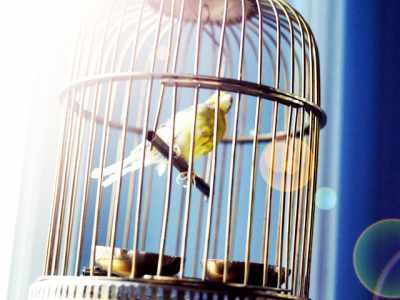 A importância dos raios UV para as aves