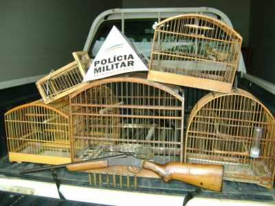 Pássaros Silvestres - Aquisição Legal