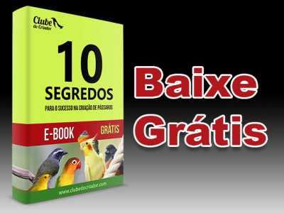 E-book - 10 Segredos para o sucesso na criação de pássaros