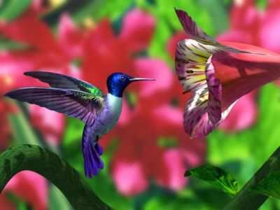 7 Curiosidades sobre os beija-flores