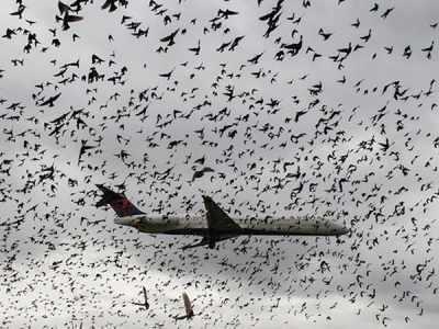Avião passa por 'nuvem' de pássaros durante pouso