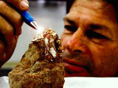 Fóssil inédito de ave pré-histórica é encontrado por pesquisador