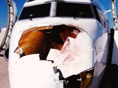 Pássaro se choca com avião, veja o estrago.