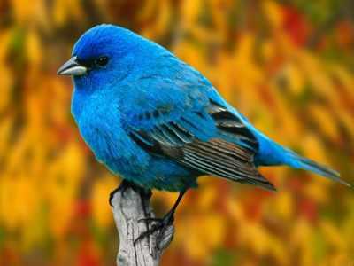 Primeiras espécies modernas de pássaros apareceram na América do Sul