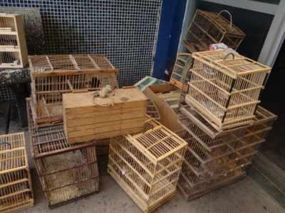 Policia Federal inicia operação contra tráfico de aves